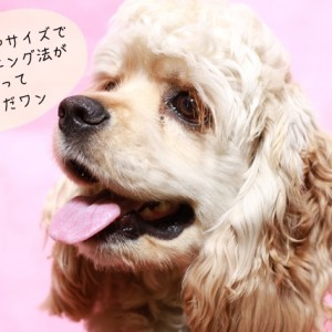 ドッグトレーナーが扱う中型犬の種類