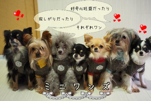 ドッグトレーナーが扱う超小型犬の種類