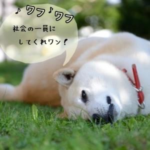 犬を社会に適応させるための訓練