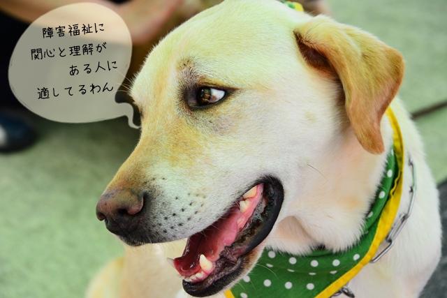 介助犬訓練士の資格と仕事