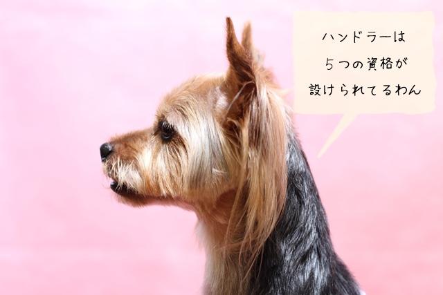 犬の調教師ハンドラーの資格