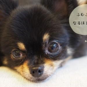 犬の訓練に使われる専門用語