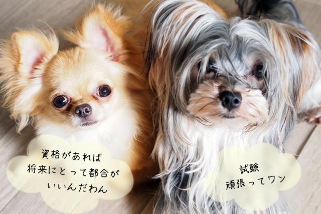 家庭犬トレーナーの講座と資格
