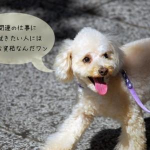 愛犬飼育管理士の資格について