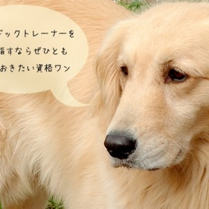 犬の訓練士の資格JKC